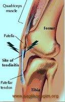 patellar-tendon