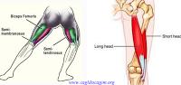 Dizin kas yapısı