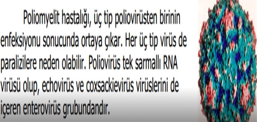 Polio virüs nedir