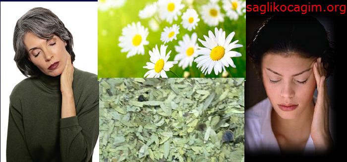 migren_bitkisel_tedavisi