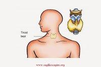 tiroid-nedir1