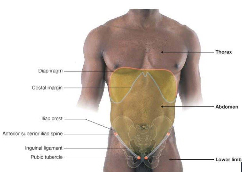 Karı anatomisi