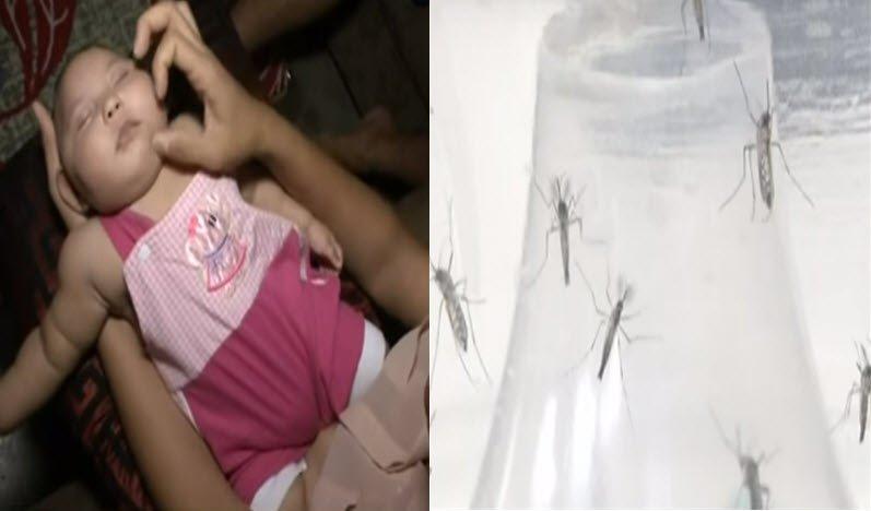 Zika virüsü nedir