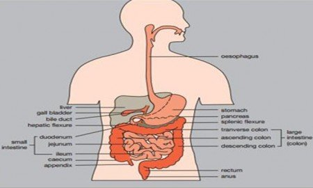 Proktit hastalığı nedir