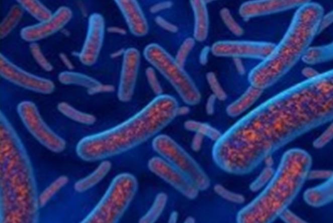 Bacterioides nedir