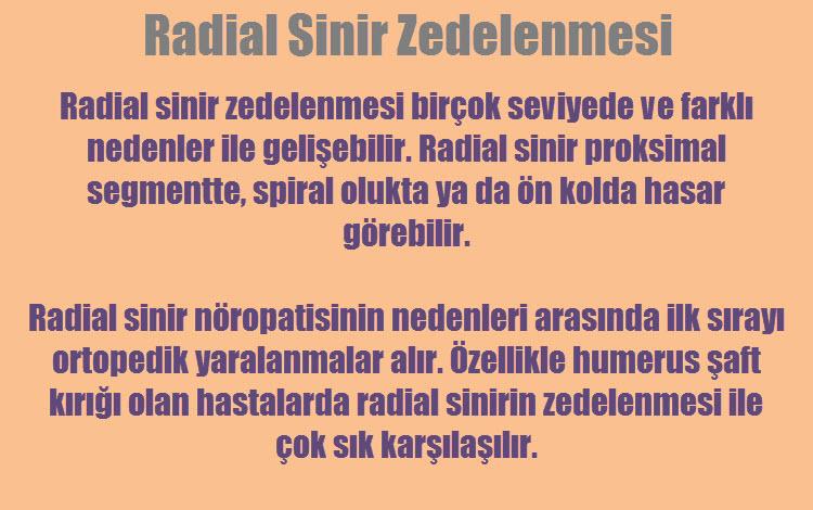 Radial sinir vücudun neresinde bulunur