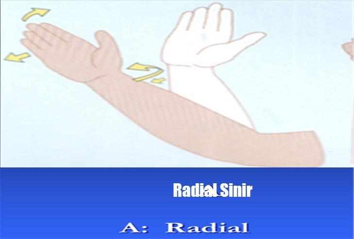 Radial sinir nedir
