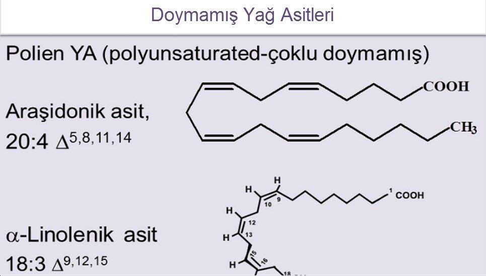 Araşidonik asit nasıl oluşur